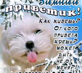Зимний привет открыточки