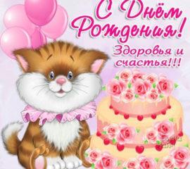 открытки котик