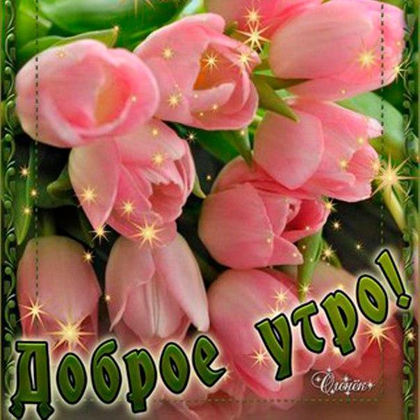 Милой розы